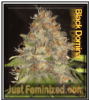 Black Domina Feminized Mix & Match Seeds